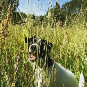 Essa é a Chili, a cachorrinha que eu cuido :)